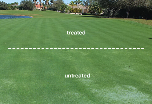 Before and After Nematode Treatment